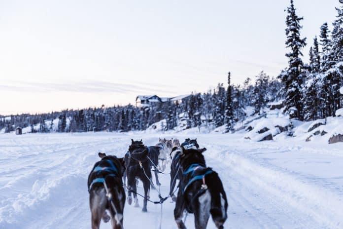 Sled dogs, photo: Priscilla du Preez via Unsplash