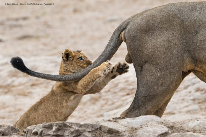 The funniest wildlife picture of 2019 © Sarah Skinner / Comedy Wildlife Photography Awards 2019