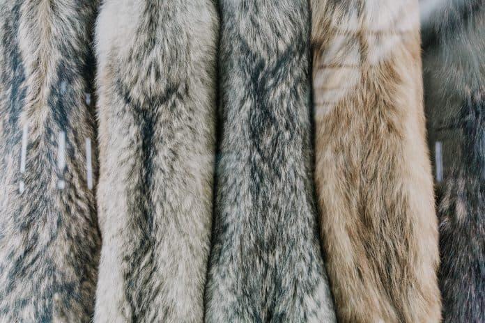 California bans the sale of all fur products, photo: Marjan Blan via Unsplash