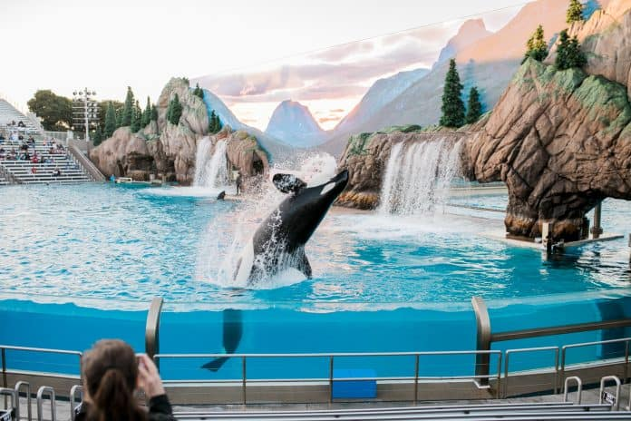 Stop selling tickets for amusement parks that abuse whales and dolphins, photo: Neonbrand via Unsplash