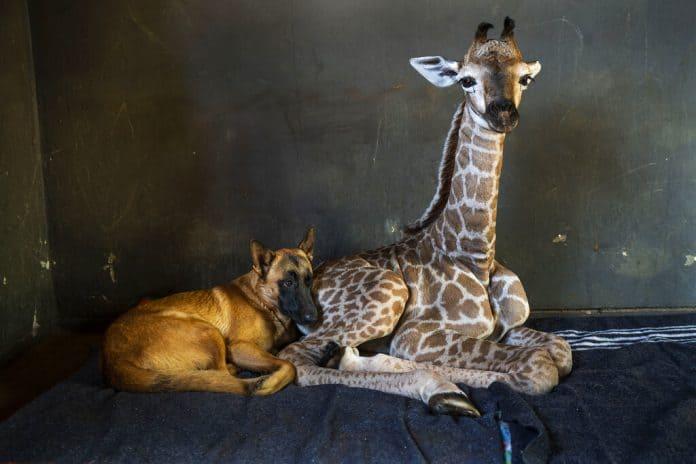 Hunter and Jazz, photo: Associated Press