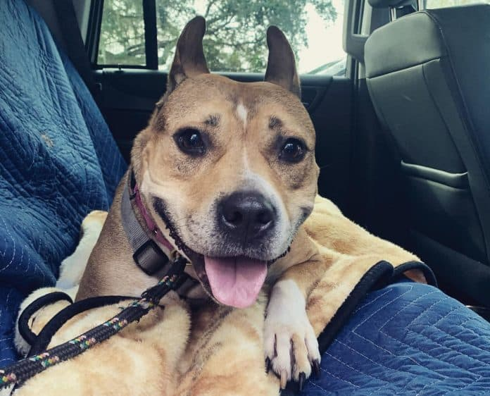 Hazel/DayDay, Photo: Manatee County Animal Services