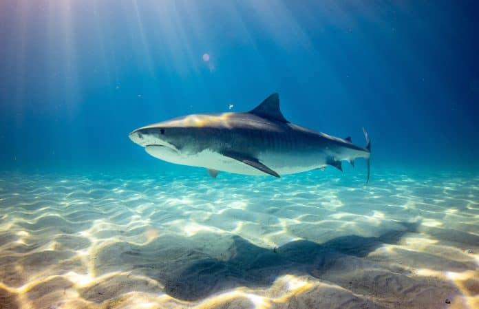Shark, Photo by Gerald Schömbs on Unsplash