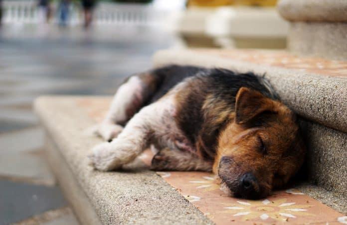 Stray animals in India need help