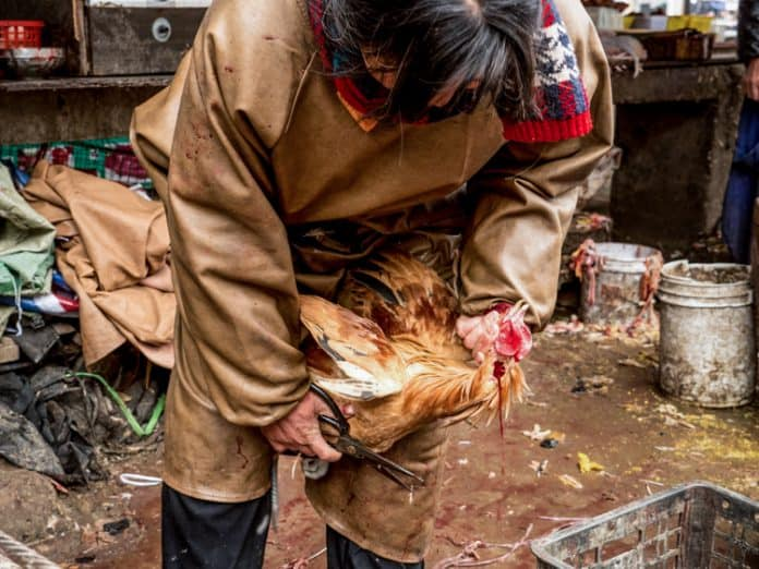 Wet market in China, 2016 © Kelly Guerin / We Animals
