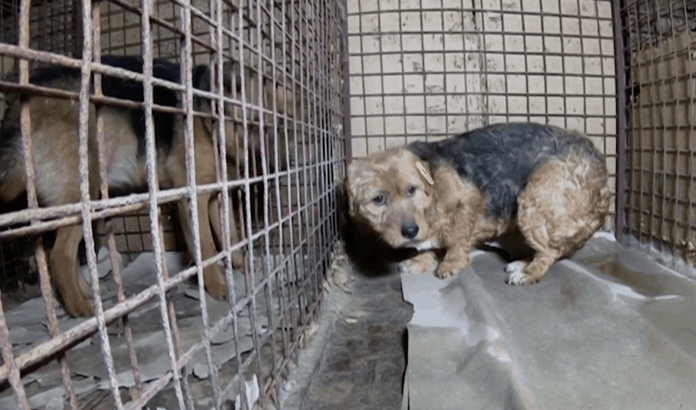 Terrified dog in Russian shelter, photo: Still video Reuters