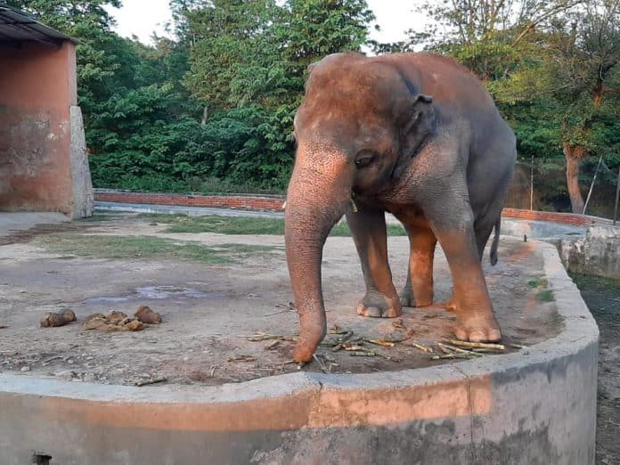 Elephant Kaavan will finally be free, photo: The Eye Of The Storm #FreeKaavan