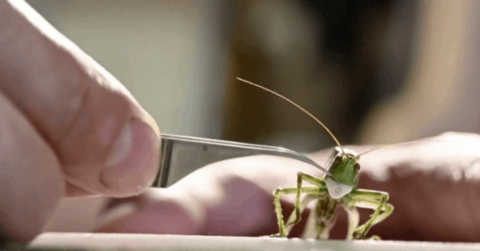 Russian artist makes masks for insects, photo: Still from video Reuters