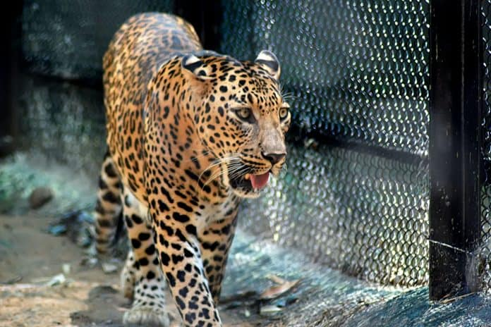 Zoo in Ukraine is struggling to feed animals