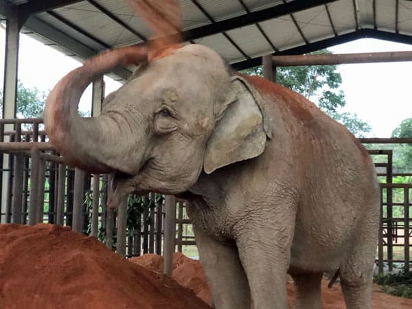 Mara's first day at the sanctuary, photo: Global Sanctuary for Elephants