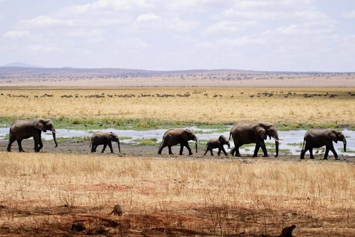 Namibia kills ten 'dangerous' elephants who destroyed crops