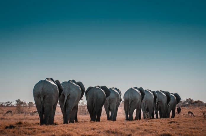44 elephants are found dead in Botswana