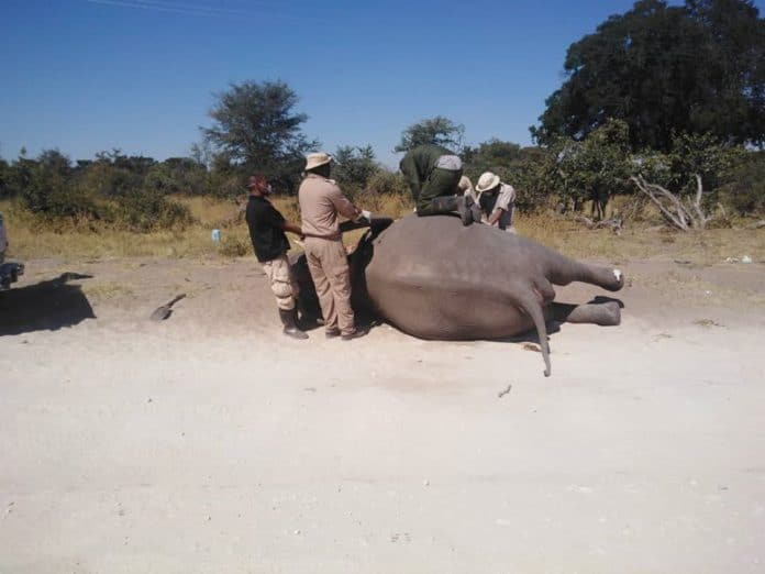 One of the elephants that died in Botswana