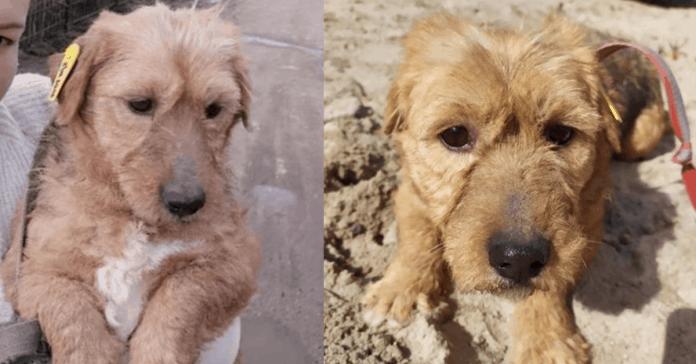 Dog Pusha needs a home, photo: Slavjanskoe