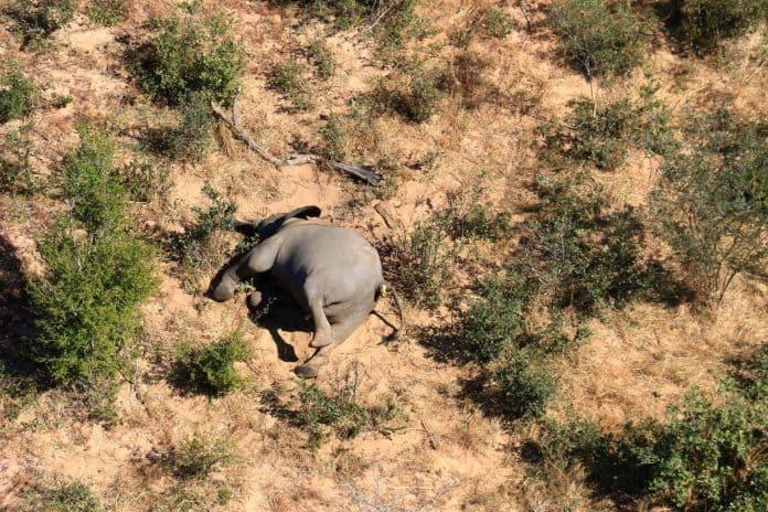 A dead elephant in Botswana, photo: Reuters