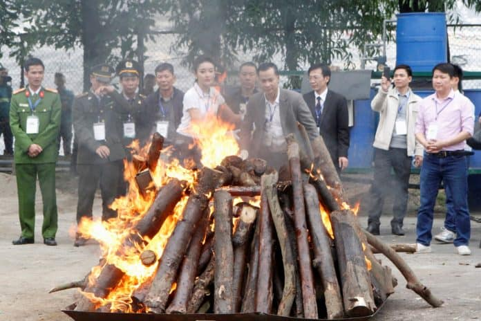 Vietnam vows to ban wildlife trade. Seized elephant ivory and rhino horns are destroyed by Vietnamese authorities in Hanoi November 12, 2016.