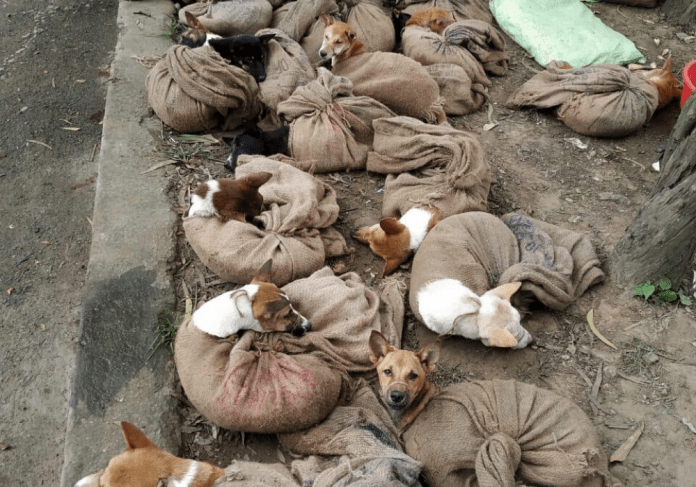 Dogs tied in bags in Nagaland, photo: Nagaland Animal Welfare Society