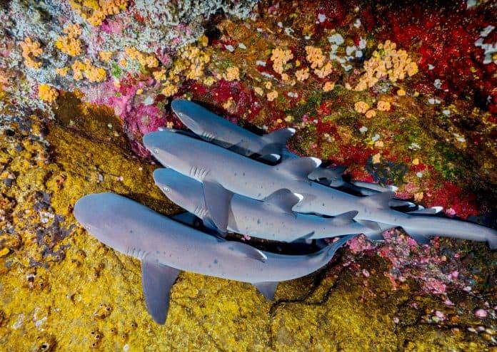 Sharks in Mexico, photo by Francisco Jesús Navarro Hernández via Unsplash