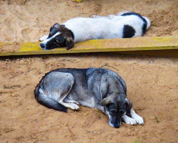 Police rescue 41 starving dogs in Spain, photo: Anastasiya Romanova on Unsplash