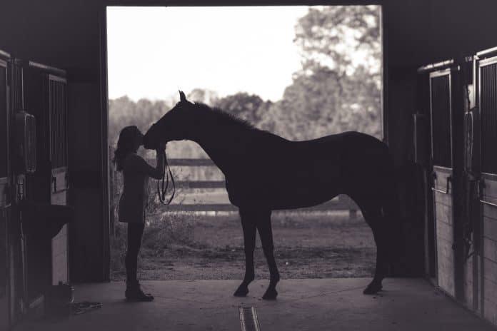Horse with owner, photo: Kenny Webster on Unsplash