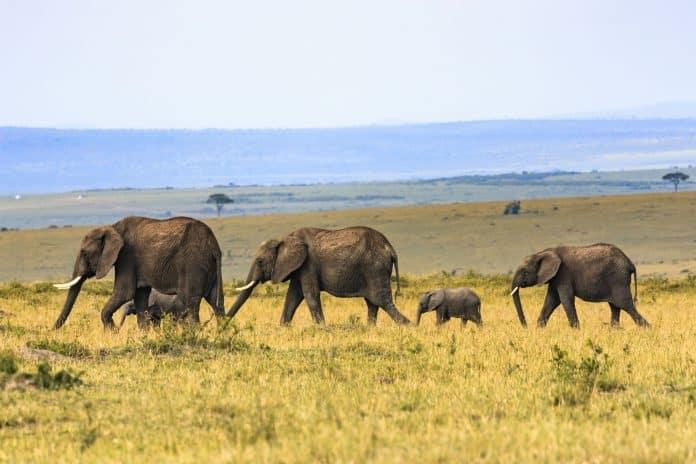 Family of elephants, photo: Larry Li via Unsplash