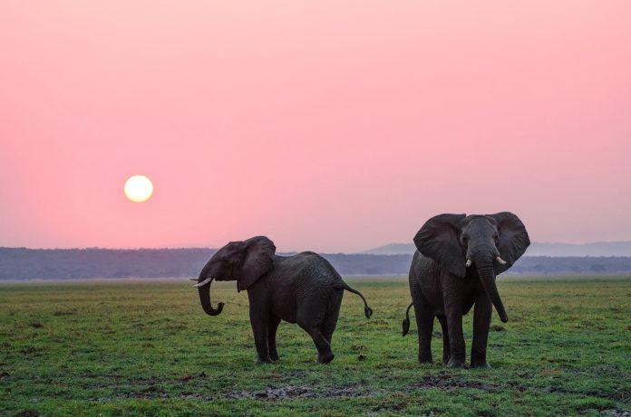 Elephants, photo: Mylon Ollila on Unsplash