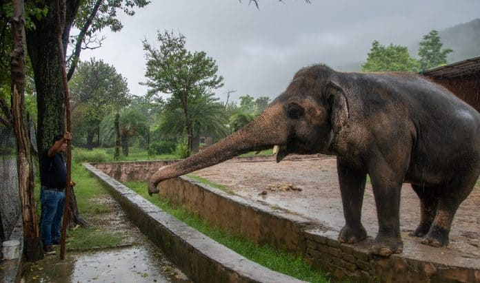 Elephant Kaavan and Dr. Amir, Pakistan, photo: FOUR PAWS