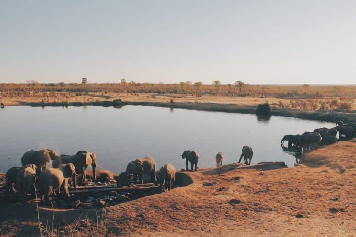 Hwange National Park, Zimbabwe, photo: Christine Donaldson on Unsplash