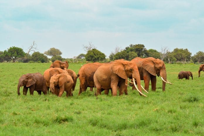 Elephants in the wild, photo: Damian Patkowski on Unsplash