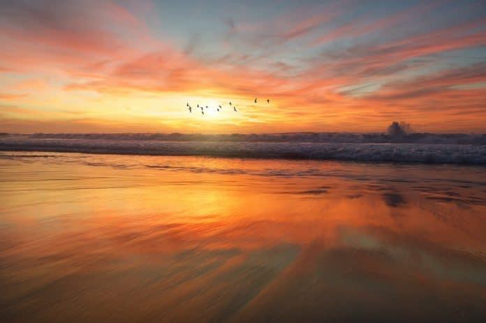Save nature, photo: frank mckenna on Unsplash