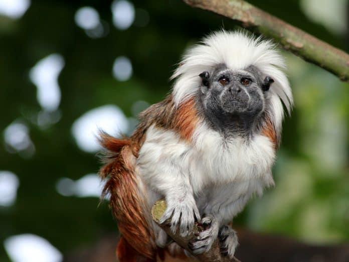 Little monkey looking into camera, photo: Sandy MillaronUnsplash