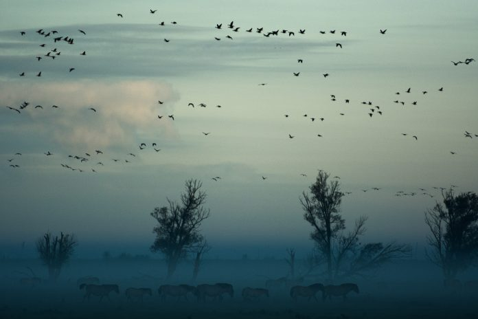 Birds, photo: Vincent van Zalinge on Unsplash