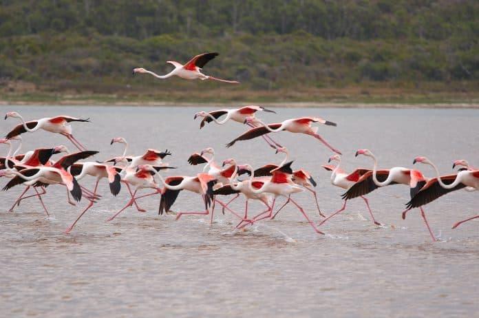 Flamingos, photo: Wolfgang Hasselmann on Unsplash