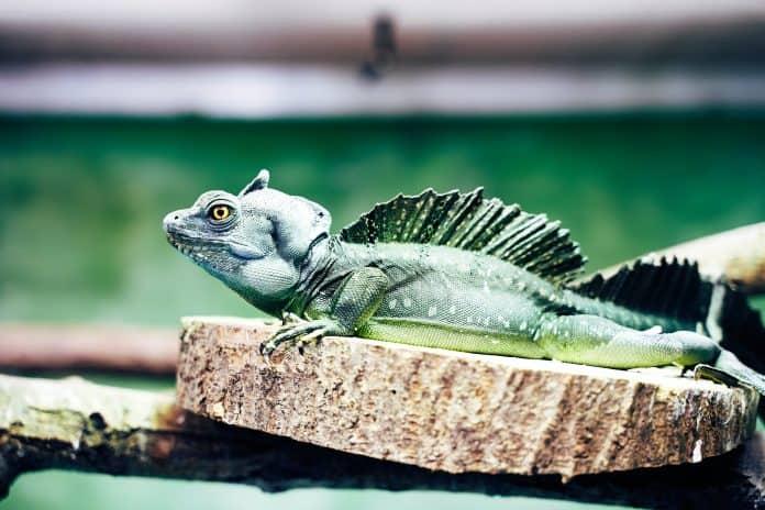 Lizard, photo: Christian Englmeier on Unsplash