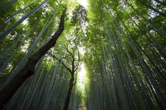Nature, photo: Jason Ortego via Unsplash