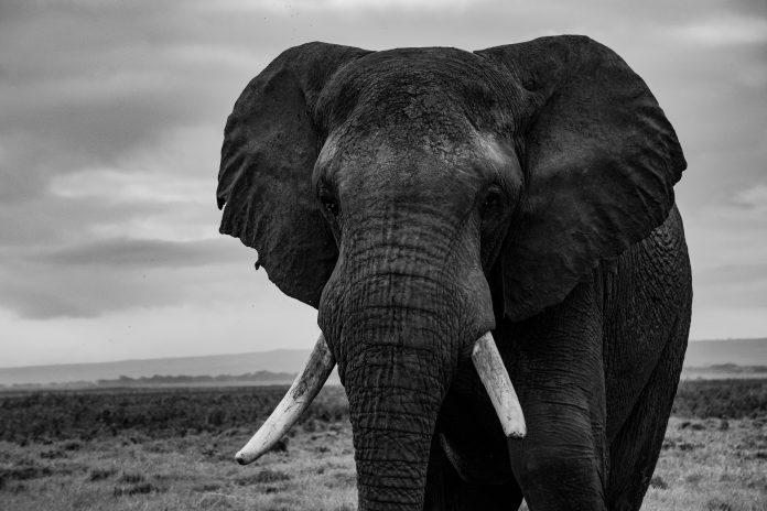 Elephant, photo: Tarek Kunze on Unsplash