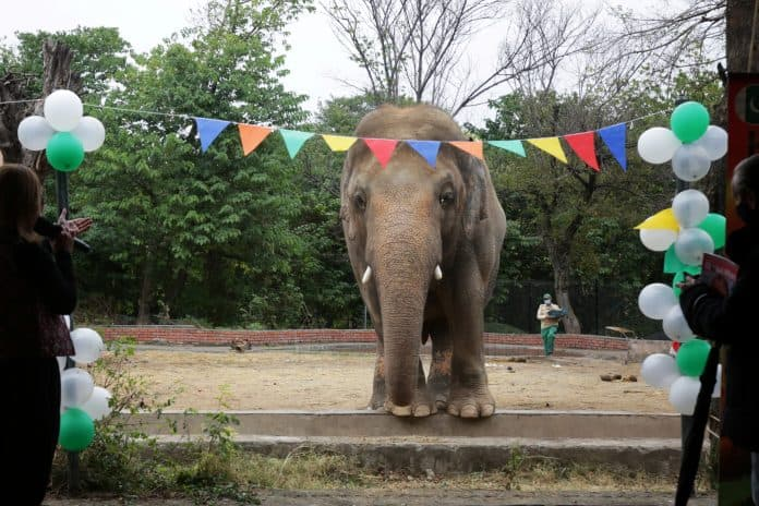 Elephant Kaavan during a farewell ceremony at Islamabad Zoo, Pakistan, photo: Reuters/Saiyna Bashir