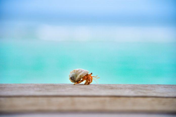Hermit crab, photo: Ahmed Sobah on Unsplash