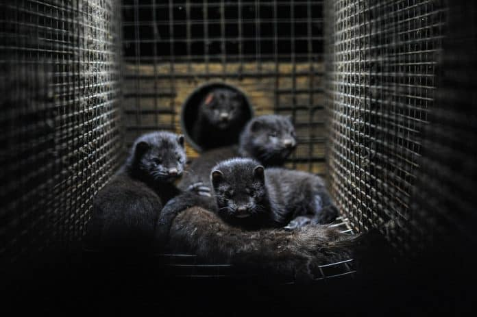 Mink babies at a fur farm cuddle the body of their dead mother, photo: Jo-Anne McArthur on Unsplash