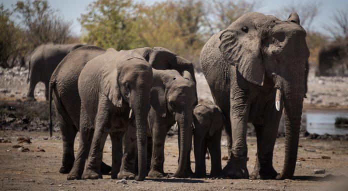Elephants in Namibia, photo: Bernd Dittrich on Unsplash