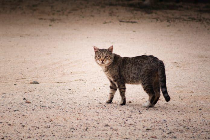 Stray cat, photo: Brian Wangenheim on Unsplash