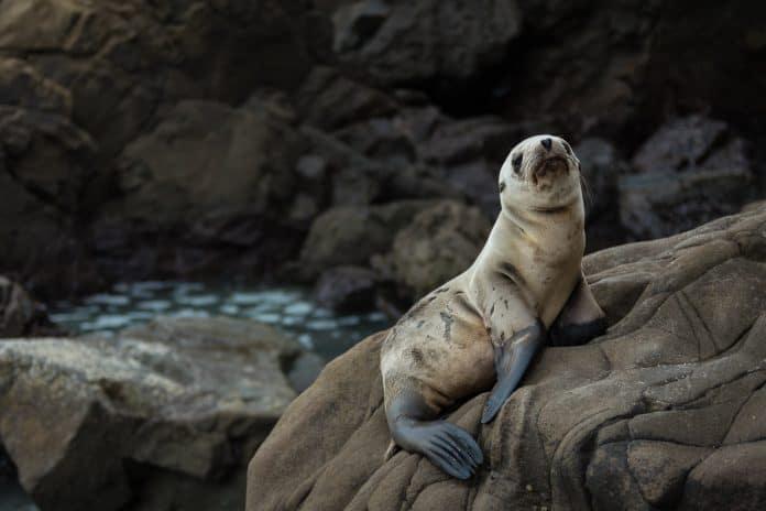 Seal on rock, photo: Kace Rodriguez on Unsplash