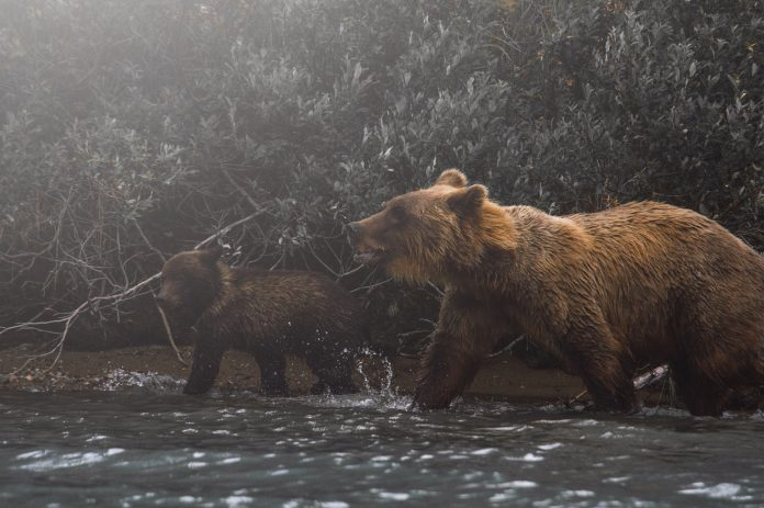 Mama bear with her kid, photo: Olen Gandy on Unsplash