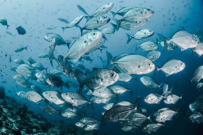 Fish, photo: Sebastian Pena Lambarri on Unsplash