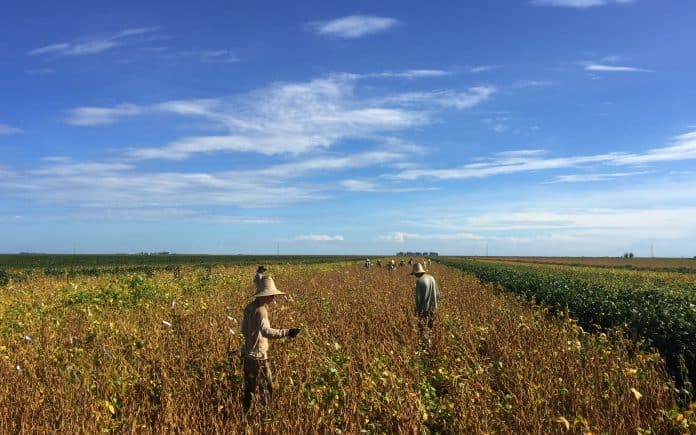 Workers at a soy plantation in Brazil, photo: Reuters/Roberto Samora
