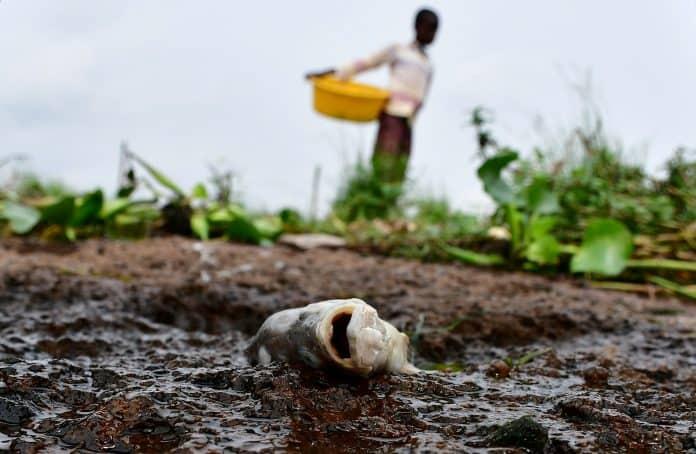 A dead fish on the shores of Lake Victoria, Uganda, photo: Reuters/Abubaker Lubowa