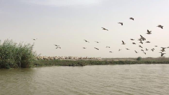 Pelicans at the Djoudj National Bird Sanctuary in Senegal, photo: still image from social media video Instagram/@David.W.Nystrom / Reuters