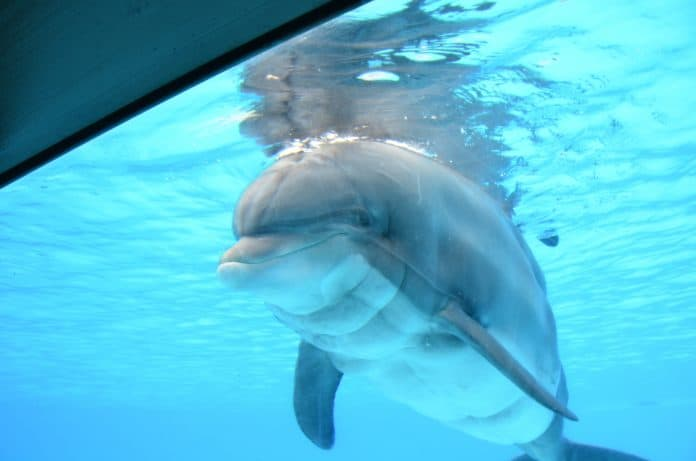 Dolphin Femke in Parc Asterix, photo: One Voice