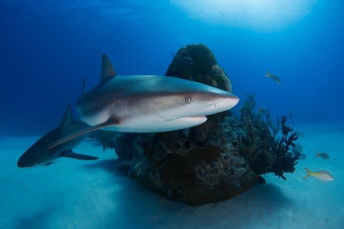 Sharks, photo:Alex RoseonUnsplash