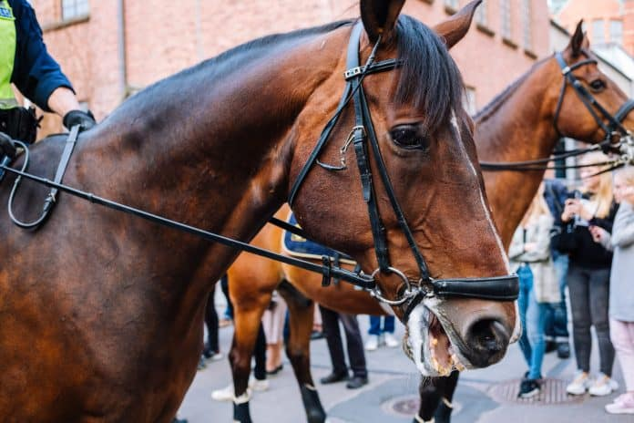 Horse forced to be in the police, photo Edvin Johansson on Unsplash